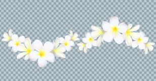 Vector Bali flowers border on transparency grid background royalty free illustration