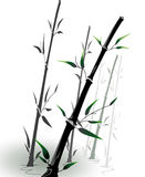 Vector bamboo Stock Image