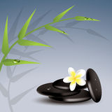 Vector bamboo, frangipani and stones Stock Image
