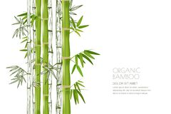 Vector bamboo plant isolated. Realistic and sketch illustration. Design for asian spa and massage, cosmetics package. Stock Photography