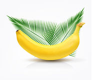 Vector banana isolated Royalty Free Stock Image