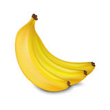 Vector bananas. Three yellow juicy bananas isolated on white background stock illustration