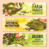 Vector bandeiras da grão e de cereais crescidos exploração agrícola ilustração stock