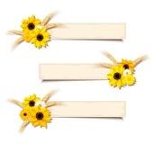 Vector bandeiras da Web com girassóis e orelhas do trigo Eps-10 ilustração do vetor