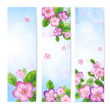 Vector banner with blossom branches. EPS10 vector illustration. Contains transparency and gradients Stock Photography