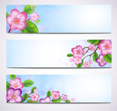 Vector banner with blossom branches. EPS10 vector illustration. Contains transparency and gradients Royalty Free Stock Image