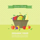 Vector banner, card with fresh fruits and berries Stock Photos