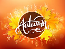 Vector banner with hand lettering label - autumn - yellow autumn maple leaves and flares.  vector illustration