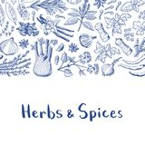 Vector hand drawn herbs and spices background with place for text illustration stock illustration