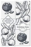 Vector banner set with hand drawn branch of of Brazil nuts. Royalty Free Stock Photos