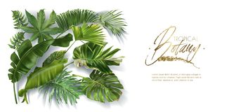 Vector banner with tropical leaves on white vector illustration