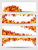Vector banners with colorful autumn leaves. Royalty Free Stock Image
