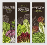 Vector banners of farm grown salads vegetables Stock Images