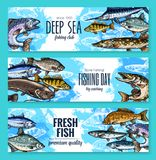 Vector banners for fishing or fish sea life. Sealife banners of deep sea or ocean fishes for fishing trip. Vector set of fresh trout, salmon or mackerel and Stock Image