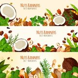 Vector banners of nuts and fruit seeds. Nuts and fruit seeds banners. Vector set of coconut, walnut or peanut and hazelnut, almond nut or pistachio and bean Stock Photos