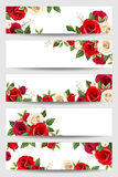 Vector banners with red and white roses. Royalty Free Stock Images