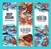 Vector banners of seafood fish products sketch. Seafood and fish product banners sea food market or restaurant. Vector sketch fresh fisherman catch marlin, bream Stock Photography