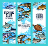 Vector banners set of fish catch for fishing club. Fishing club banners of fresh fisherman fish catch. Vector set of sea marlin, flounder or salmon and tuna Stock Photo