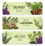 Vector banners set of natural spices and herbs. Spices and herbs banners set for farm garden green herbal products. Vector lavender, oregano or parsley and Stock Image