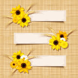 Vector banners with sunflowers and ears of wheat on a sacking background. Eps-10. Three vector beige banners with sunflowers, daisy and ears of wheat on a Royalty Free Stock Image