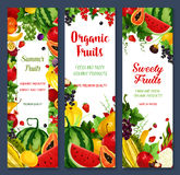 Vector banners of tropical fruits or fresh berries. Fresh fruits and berries vector banners. Farm watermelon and peach, tropical papaya and pineapple, apricot Stock Image