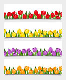 Vector banners with tulip flowers. Stock Image