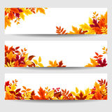 Vector Banners With Colorful Autumn Leaves. Stock Photography