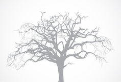 Vector Bare Old Dry Dead Tree Silhouette Without L Royalty Free Stock Images