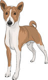 Vector Basenji Royalty Free Stock Photo