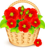 Vector basket with beautiful red flowers Royalty Free Stock Photography