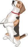 Vector. Beagle dog. Stock Image