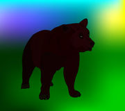 Vector bear Royalty Free Stock Images