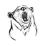 Vector bear. Engrave isolated vector bear graphic background Royalty Free Stock Image