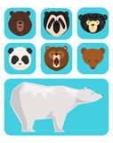 Vector bears different style funny happy animals cartoon predator cute bear character illustration.  Stock Images