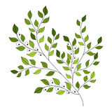 Vector Beautiful Colored Contour Leaf Royalty Free Stock Photo