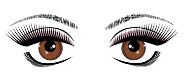 Vector Beautiful Eye. Vector illustration of a beautiful eye with long lashes Stock Photos