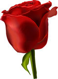 Vector beautiful red rose Stock Photography