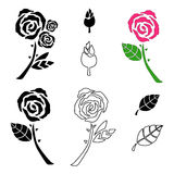 Vector beautiful rose flowers. Royalty Free Stock Photos
