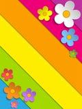 Beautiful Spring Flowers Rainbow Background Stock Photos