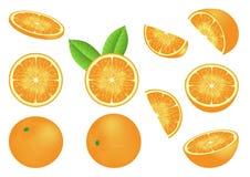 Vector beeld met geïsoleerdee sinaasappelen Stock Afbeeldingen