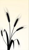vector beeld van wheaten oren Stock Foto