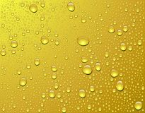 Vector. Beer drops Royalty Free Stock Photos