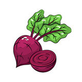 Vector beetroot illustration on white background Royalty Free Stock Photo