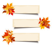 Vector beige banners with colorful autumn leaves. Stock Images