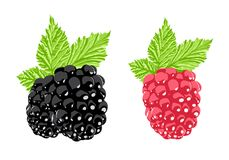Vector berry Stock Photography