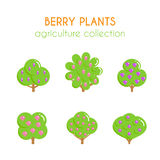 Vector berry bush illustration. Blavkberry plant. Growth of berries. Currant and dogwood designs. Flat argiculture Stock Images