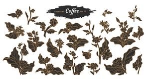 Vector big set of coffee branch Royalty Free Stock Image