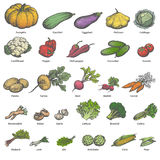 Vector big set different colored ripe vegetables. Vector illustration of a big set of different colored ripe vegetables with names. On an isolated white stock illustration