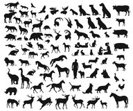 Vector big set of different wild and domesticated animals on white background. Big set of different wild and domesticated animals on white background stock illustration