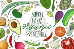 Vector big set of vegetables in a realistic sketch style. Healthy food, natural product, vegetable farm, vegan food, sports nutrit royalty free illustration